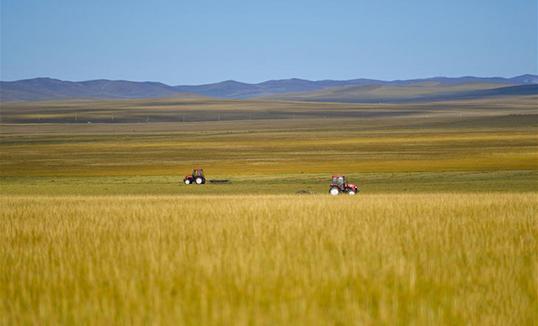 Өвөр монголчууд хадландаа яарч байна
