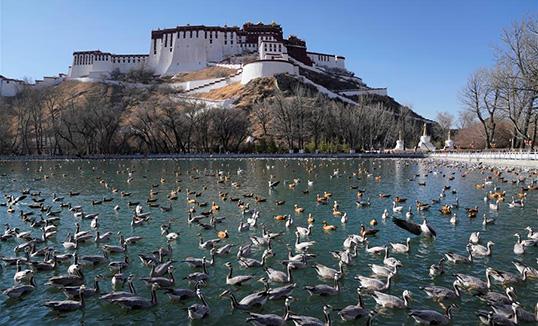 Хятадын хаврын үзэмж