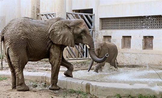 Амьтдыг наршихаас сэргийлэх арга хэмжээ авч байна