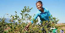 Ерөнхий нарийн бичгийн дарга Ши Жиньпингийн сэтгэл тавьж байгаа асуудлууд: Шинэ амьдрал, шинэ эрмэлзэл—-Ядуурлаас ангижрах шинэ байдалтай түлхүү танилцах нь